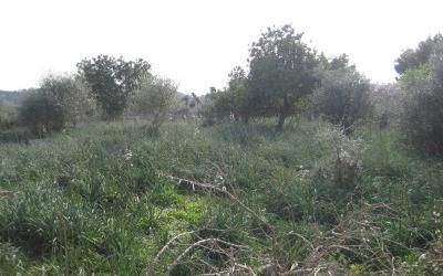 724249 - Plot For sale in Capdepera, Mallorca, Baleares, Spain