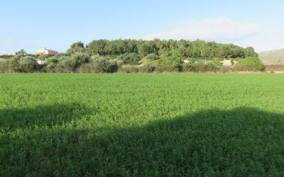 724250 - Plot For sale in Capdepera, Mallorca, Baleares, Spain